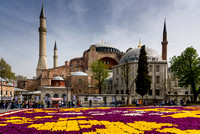 Hagia Sophia And Tulips In Istanbul Turkey